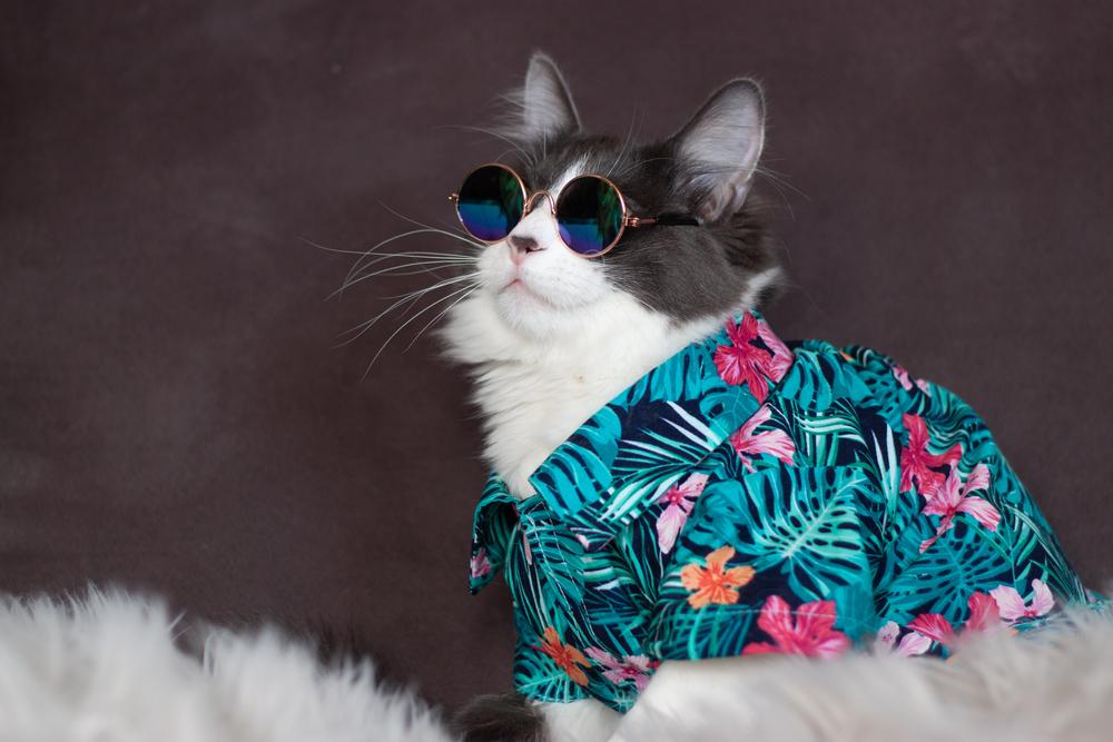 Cool Cat Wearing Shirt